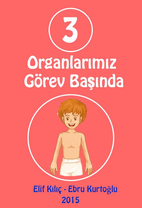 ebrukurtoglu-organlarimiz_gorev_basinda_02